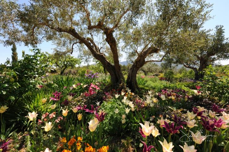 Beneath the Olive Tree © Josie Elias full size wm
