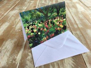 IMG_4480 Tulip Dance wmsm